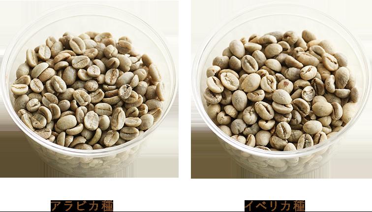 アラビカ種/カネフォラ種